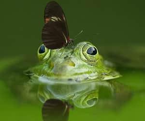 green, naturaleza, and verde image