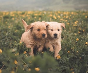 adorable, dogs, and pups image