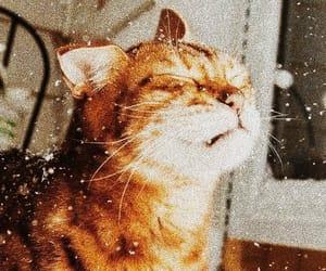 animals, cat, and neon image