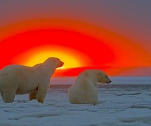 animals, sunset, and Polar Bear image