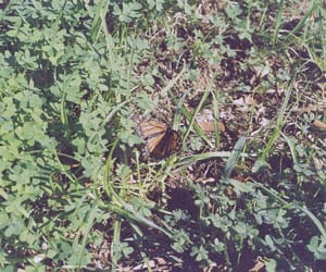 butterfly, film, and nature image