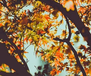 fall, leaves, and autumn image
