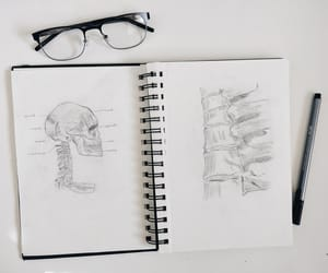 anatomy, black and white, and college image