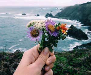 flowers, amazing view, and nature image