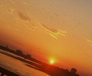 beautiful, sunset, and birds image