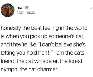 cats, funny, and memes image