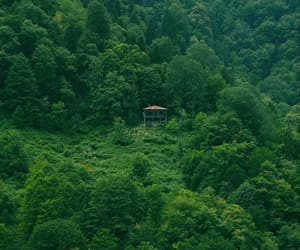 alone, home, and forest image