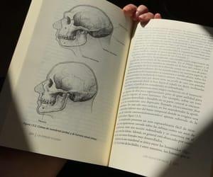 anthropology, archaeology, and kombucha image