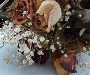 flowers, grey, and gypsophila image
