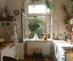 cat, kitchen, and plants image