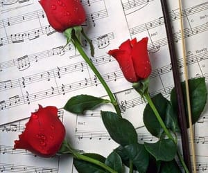 red, water drops, and roses image