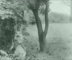 alice in wonderland, vintage, and gif image