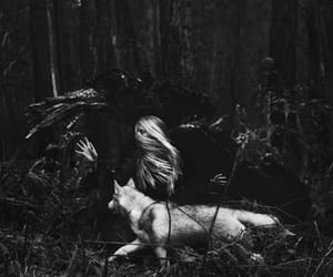 aesthetic, nature, and dark image