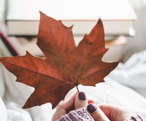 article, autumn, and cafe image