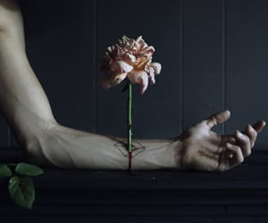 flowers, grunge, and rose image