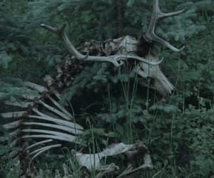 forest, deer, and skeleton image