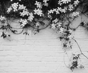 black, flowers, and wall image