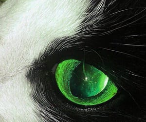 aesthetics, cat, and green image
