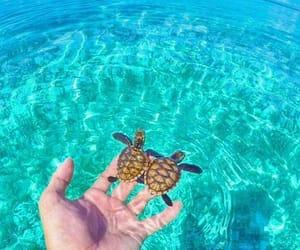 animal, beach, and environment image