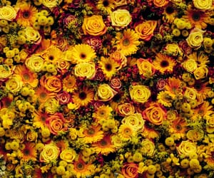 color, flowers, and photography image
