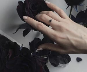 black, black rose, and hand image