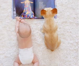 funny, pet, and reading image