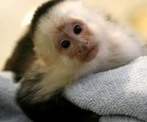 baby animal, baby monkey, and cute animal image