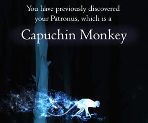 Capuchin, harry potter, and expecto patronum image