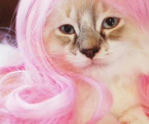 cat, icon, and wig image