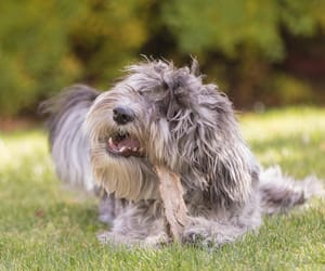 dogs, pets, and puppies image