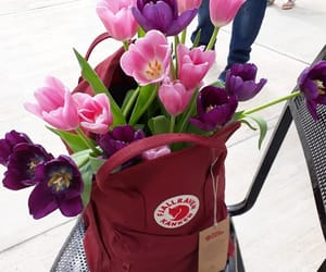 inlove, kanken, and tulips image