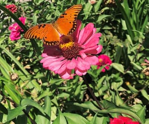 butterflies, flowers, and green image