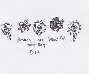 flowers, beautiful, and quote image