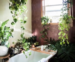 plants, bath, and interior image