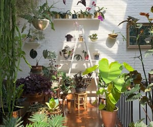 interior design, urban, and jungalow image