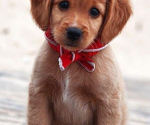 adorable, cuteness, and dogs image