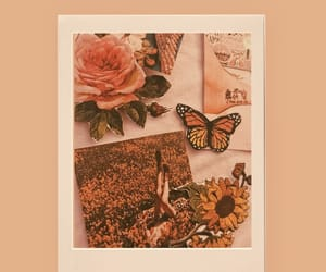 butterfly, editor, and flowers image