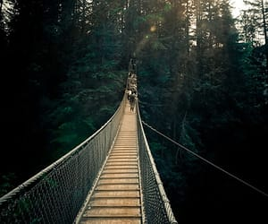 british columbia, canada, and lynn canyon park image