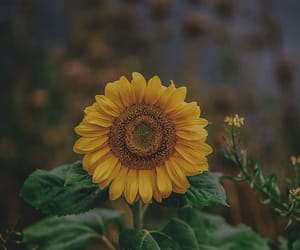 flower, yellow, and yellow flower image