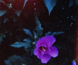 botanical, eve, and flowers image