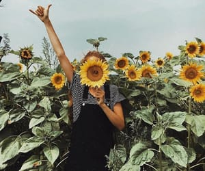 sunflower, aesthetic, and fashion image