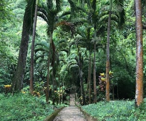 exotic, tropical, and forest image