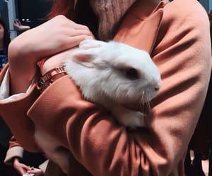 animals, girls, and rabbit image