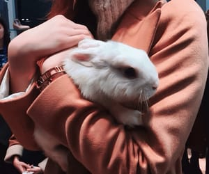 animals, rabbit, and by kristina image