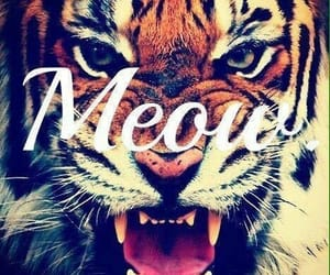 meow, tiger, and strong image