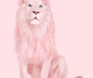 pink, lion, and wallpaper image