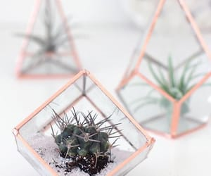 decoration, plants, and aesthetic image