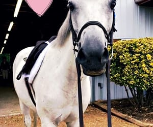 equine, success, and heartthis! image