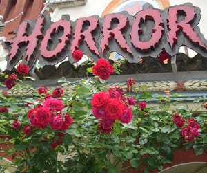 horror and rose image