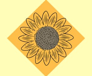 oh my!, Seventeen, and sunflower image